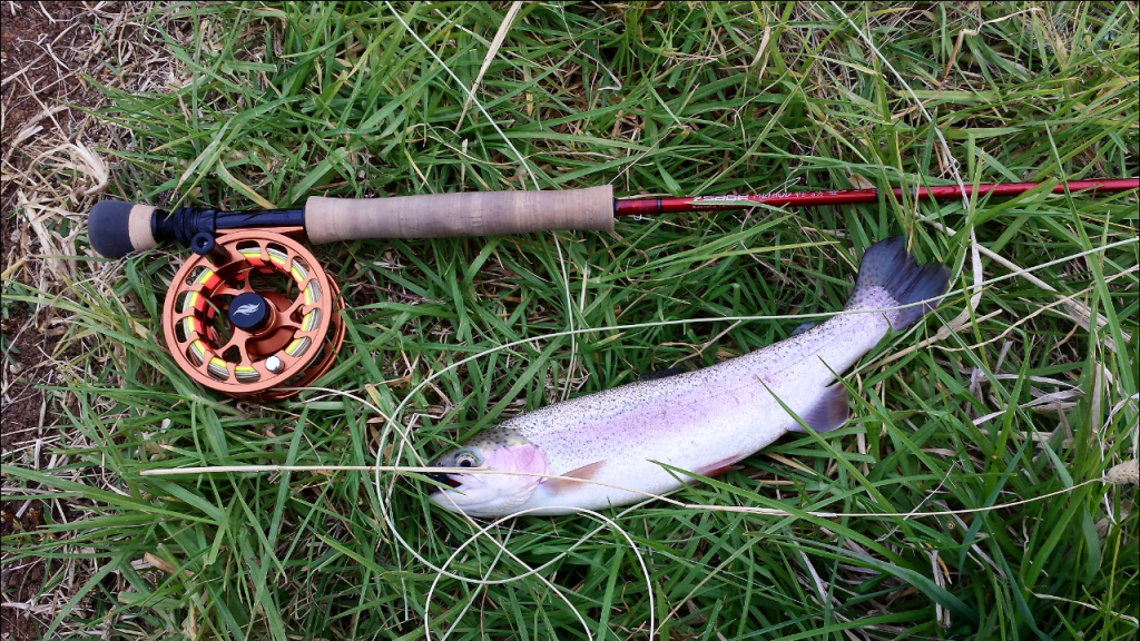 harcourt-rob-fish